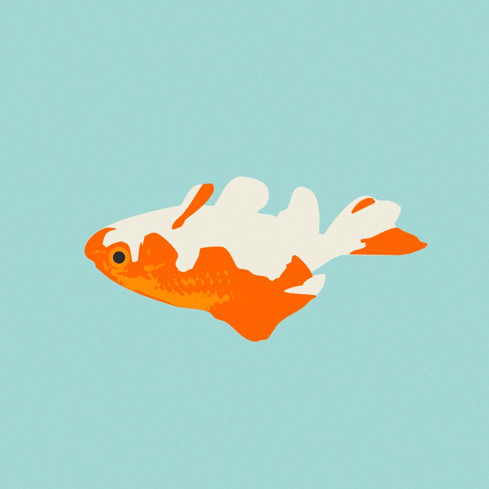 illustrazione In un acquario di cristallo - Mattia Gargiulo - SPLIT - Pidgin Edizioni